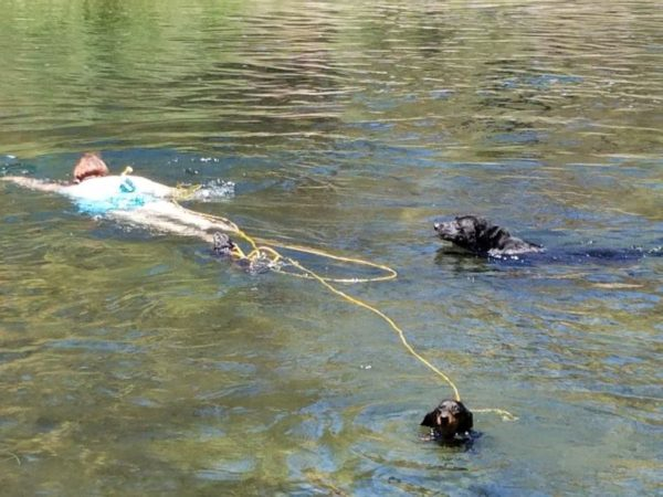 Becca tries to drown her dogs